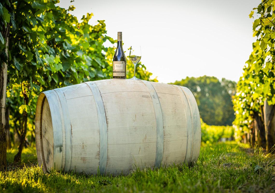 Steirabua Weißwein - Weinfass im Weingarten