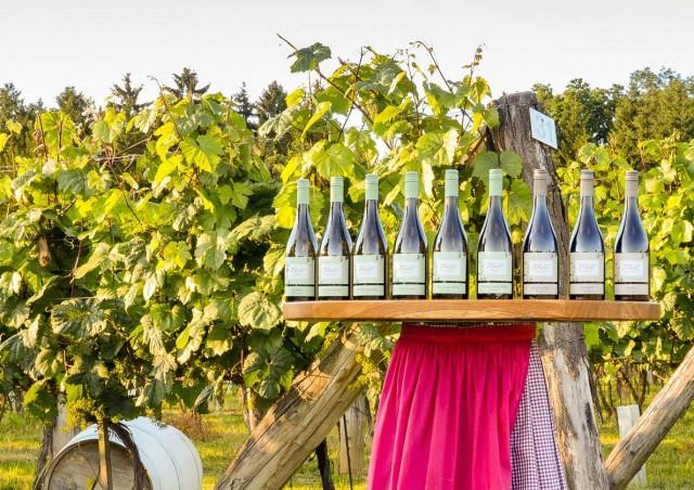 Weinpräsentation der Kohl Weine auf Tisch